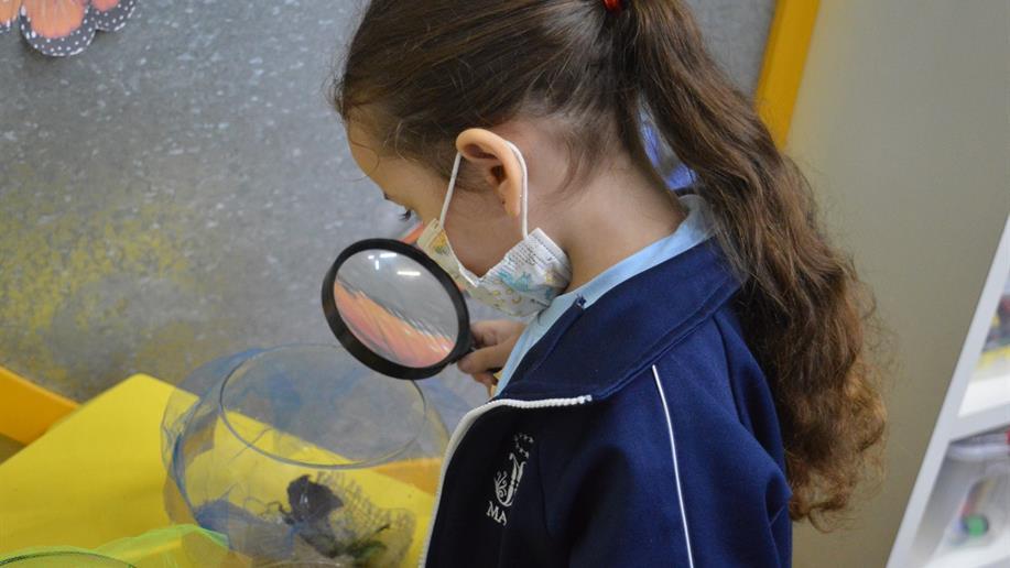 Em atividade que conciliou teoria e prática a partir da curiosidade das crianças, os estudantes do Nível 3 da Educação Infantil vivenciaram a transformação da lagarta em borboleta através de metodologias lúdicas e afetivas